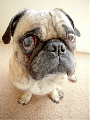 Clean Pet Odors From Carpet