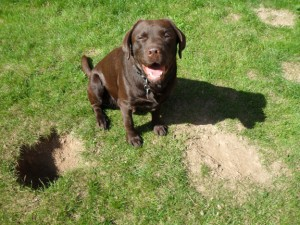 How To Stop a Dog From Digging Holes|Prevent Dogs From Digging