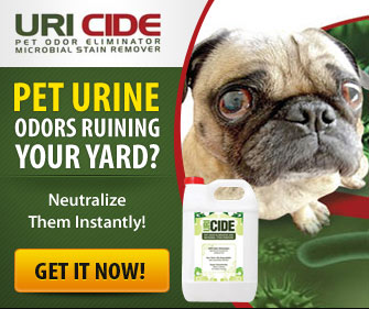 Eliminate Pet Smells On Artificial Turf Remove Urine