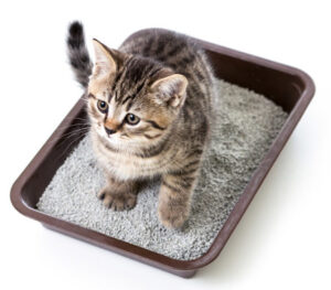 What causes cats to pee outside the litter box and how do we clean up cat urine?