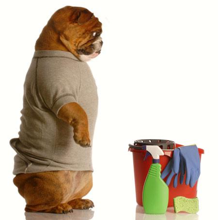 best odor removers for dog urine cat urine