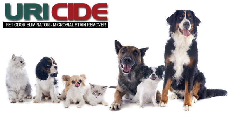 Welcome to the Uricide.com pet owners blog!