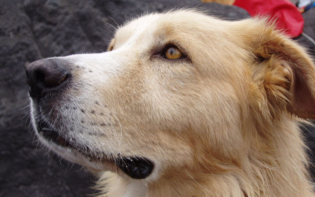 excessive dog barking and other behavioral issues