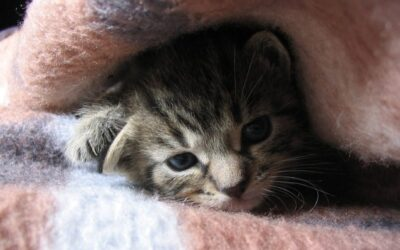 Pet Health: What to do when your cat or dog has a cold