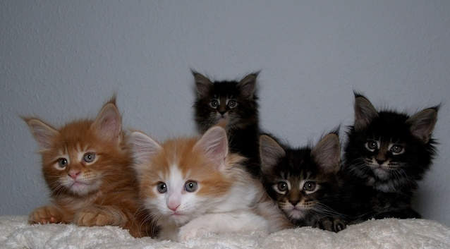 pet odor removal and training kittens to use the litter box