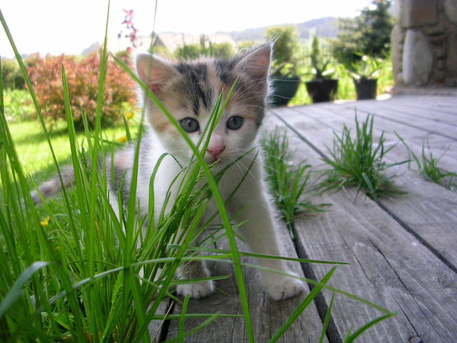 Ensuring your new feline friend feels welcome in your home
