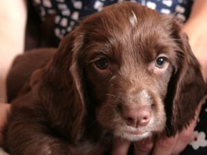 puppy pee on carpet, how to remove odors