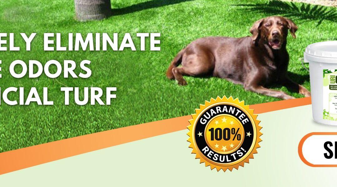 Yard Smells like Dog Pee | Homemade Yard Odor Eliminator